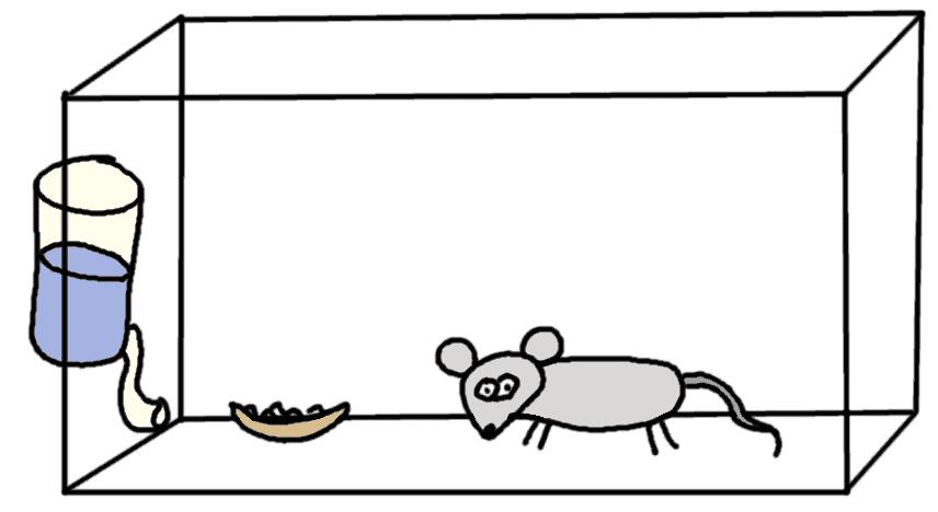 souris de laboratoire - comic