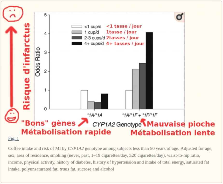 Graphique : Génotype CYP1A2 et risque d'infarctus