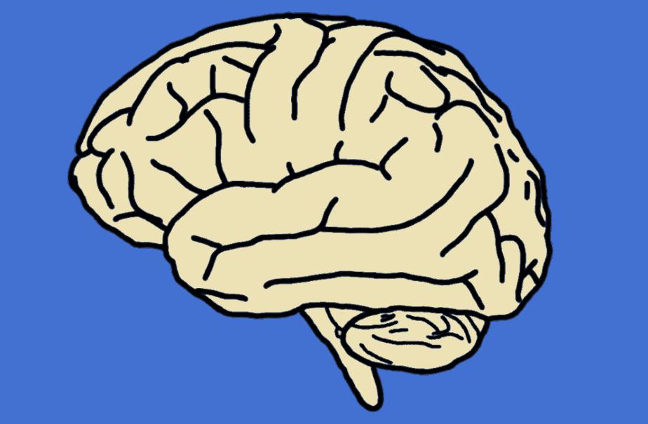cerveau - dessin